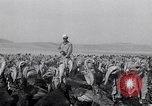 Image of turkey Westley California USA, 1933, second 27 stock footage video 65675032944