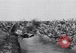 Image of turkey Westley California USA, 1933, second 47 stock footage video 65675032944