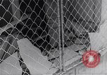 Image of Hungarian Revolution Hungary, 1956, second 10 stock footage video 65675033232