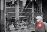 Image of Hungarian Revolution Hungary, 1956, second 54 stock footage video 65675033234