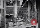 Image of Hungarian Revolution Hungary, 1956, second 55 stock footage video 65675033234