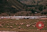Image of Sheep and roadways Frisco Colorado United States USA, 1971, second 22 stock footage video 65675033332
