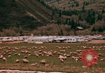 Image of Sheep and roadways Frisco Colorado United States USA, 1971, second 23 stock footage video 65675033332
