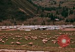 Image of Sheep and roadways Frisco Colorado United States USA, 1971, second 24 stock footage video 65675033332