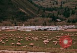 Image of Sheep and roadways Frisco Colorado United States USA, 1971, second 25 stock footage video 65675033332