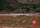 Image of Sheep and roadways Frisco Colorado United States USA, 1971, second 26 stock footage video 65675033332
