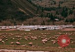 Image of Sheep and roadways Frisco Colorado United States USA, 1971, second 27 stock footage video 65675033332