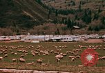 Image of Sheep and roadways Frisco Colorado United States USA, 1971, second 28 stock footage video 65675033332