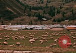 Image of Sheep and roadways Frisco Colorado United States USA, 1971, second 30 stock footage video 65675033332