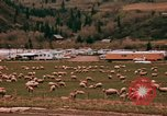 Image of Sheep and roadways Frisco Colorado United States USA, 1971, second 32 stock footage video 65675033332