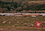 Image of Sheep and roadways Frisco Colorado United States USA, 1971, second 33 stock footage video 65675033332