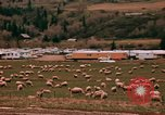 Image of Sheep and roadways Frisco Colorado United States USA, 1971, second 34 stock footage video 65675033332