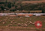 Image of Sheep and roadways Frisco Colorado United States USA, 1971, second 35 stock footage video 65675033332
