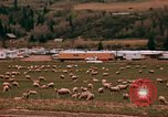Image of Sheep and roadways Frisco Colorado United States USA, 1971, second 36 stock footage video 65675033332