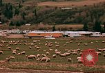 Image of Sheep and roadways Frisco Colorado United States USA, 1971, second 37 stock footage video 65675033332