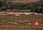 Image of Sheep and roadways Frisco Colorado United States USA, 1971, second 38 stock footage video 65675033332