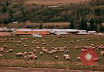 Image of Sheep and roadways Frisco Colorado United States USA, 1971, second 39 stock footage video 65675033332