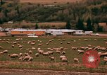 Image of Sheep and roadways Frisco Colorado United States USA, 1971, second 40 stock footage video 65675033332