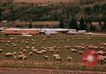 Image of Sheep and roadways Frisco Colorado United States USA, 1971, second 41 stock footage video 65675033332
