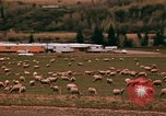 Image of Sheep and roadways Frisco Colorado United States USA, 1971, second 42 stock footage video 65675033332
