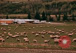 Image of Sheep and roadways Frisco Colorado United States USA, 1971, second 43 stock footage video 65675033332