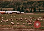 Image of Sheep and roadways Frisco Colorado United States USA, 1971, second 44 stock footage video 65675033332