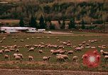 Image of Sheep and roadways Frisco Colorado United States USA, 1971, second 45 stock footage video 65675033332