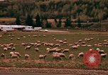 Image of Sheep and roadways Frisco Colorado United States USA, 1971, second 46 stock footage video 65675033332
