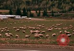 Image of Sheep and roadways Frisco Colorado United States USA, 1971, second 47 stock footage video 65675033332