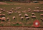 Image of Sheep and roadways Frisco Colorado United States USA, 1971, second 50 stock footage video 65675033332