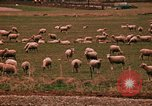 Image of Sheep and roadways Frisco Colorado United States USA, 1971, second 51 stock footage video 65675033332