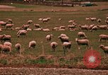 Image of Sheep and roadways Frisco Colorado United States USA, 1971, second 52 stock footage video 65675033332