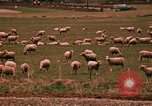 Image of Sheep and roadways Frisco Colorado United States USA, 1971, second 53 stock footage video 65675033332