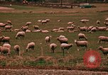 Image of Sheep and roadways Frisco Colorado United States USA, 1971, second 56 stock footage video 65675033332