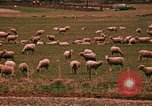 Image of Sheep and roadways Frisco Colorado United States USA, 1971, second 57 stock footage video 65675033332