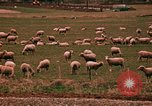 Image of Sheep and roadways Frisco Colorado United States USA, 1971, second 59 stock footage video 65675033332