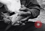 Image of Pigeon messengers Tunisia North Africa, 1943, second 32 stock footage video 65675033484