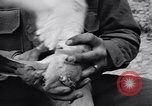 Image of Pigeon messengers Tunisia North Africa, 1943, second 33 stock footage video 65675033484
