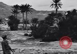 Image of Pigeon messengers Tunisia North Africa, 1943, second 48 stock footage video 65675033484