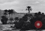 Image of Pigeon messengers Tunisia North Africa, 1943, second 49 stock footage video 65675033484