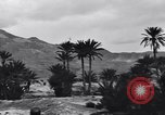 Image of Pigeon messengers Tunisia North Africa, 1943, second 50 stock footage video 65675033484