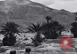 Image of Pigeon messengers Tunisia North Africa, 1943, second 53 stock footage video 65675033484
