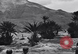 Image of Pigeon messengers Tunisia North Africa, 1943, second 54 stock footage video 65675033484