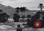Image of Pigeon messengers Tunisia North Africa, 1943, second 57 stock footage video 65675033484