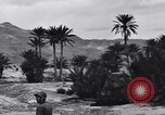 Image of Pigeon messengers Tunisia North Africa, 1943, second 58 stock footage video 65675033484