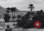 Image of Pigeon messengers Tunisia North Africa, 1943, second 59 stock footage video 65675033484