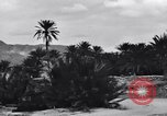 Image of Pigeon messengers Tunisia North Africa, 1943, second 61 stock footage video 65675033484
