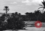 Image of Pigeon messengers Tunisia North Africa, 1943, second 62 stock footage video 65675033484