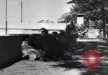 Image of Allied soldiers Southern France, 1944, second 26 stock footage video 65675037767