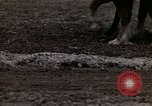 Image of Farmer plowing field New York United States USA, 1970, second 48 stock footage video 65675040534